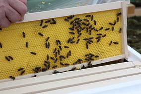Trafo-Bienen im Einsatz